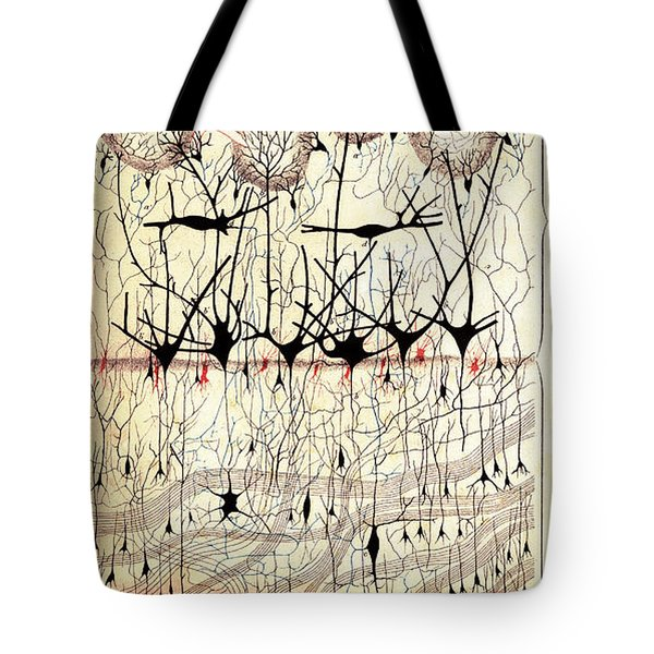 Golgi Olfactory Bulb Of Dog Tote Bag
