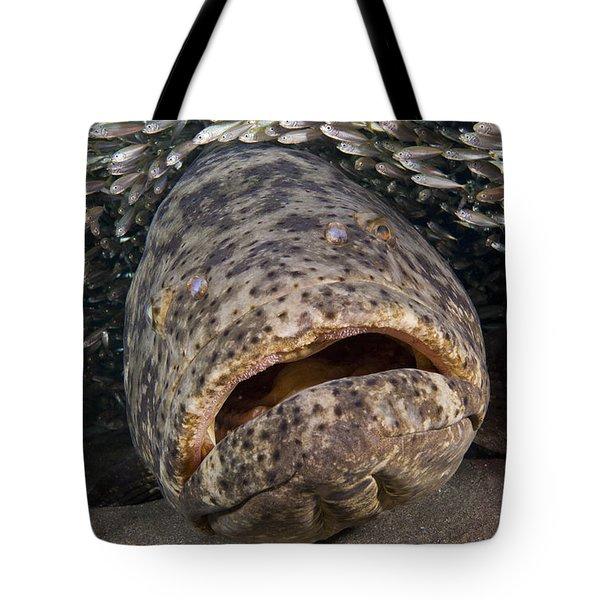 Goliath Grouper Tote Bag