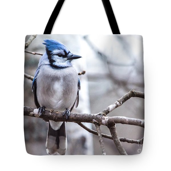 Gorgeous Blue Jay Tote Bag