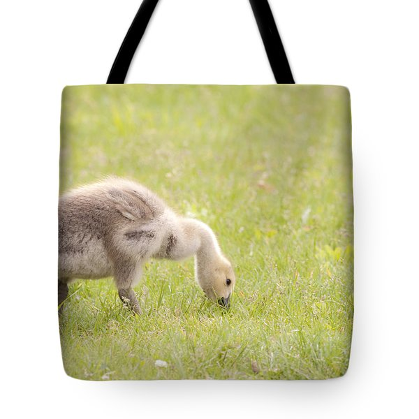Gosling Tote Bag by Jeannette Hunt