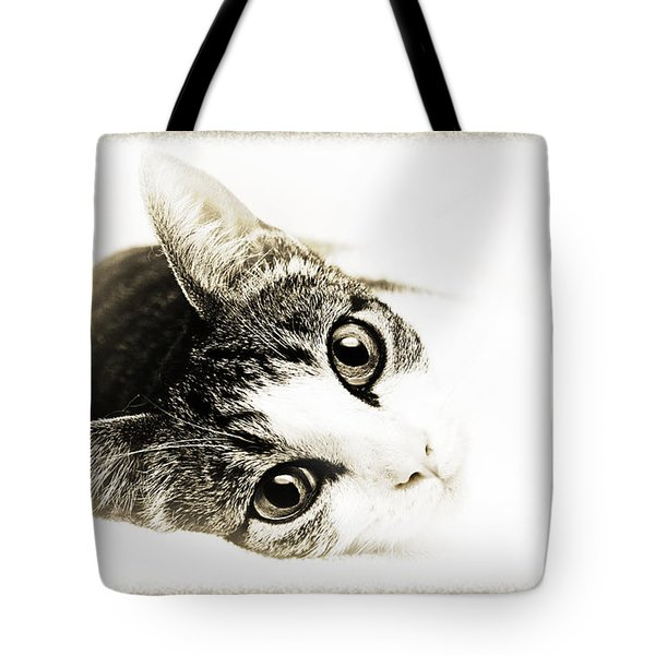 Grand Kitty Cuteness 3 High Key Tote Bag by Andee Design