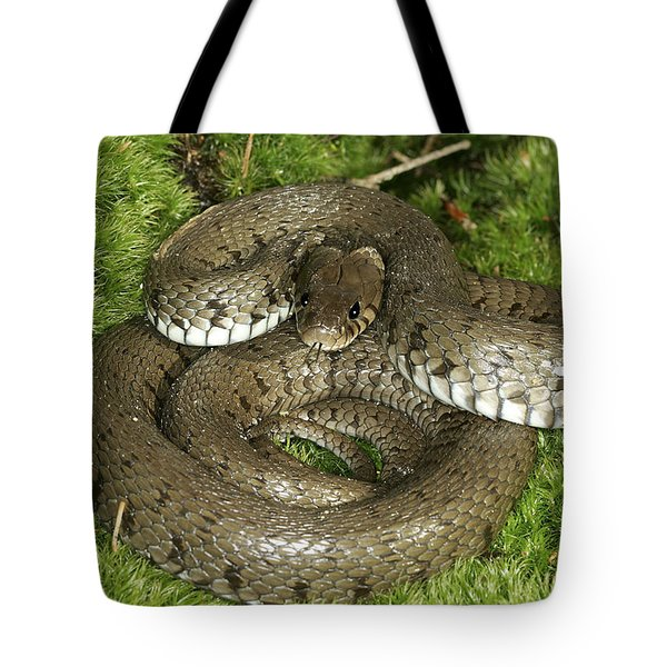 Grass Or Ringed Snake Tote Bag