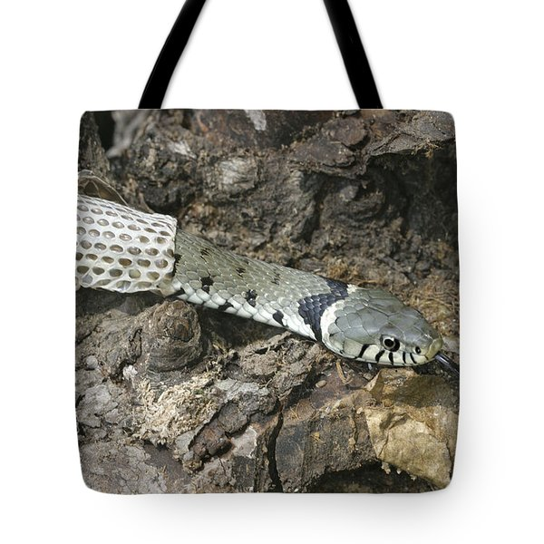 Grass Snake Shedding Tote Bag