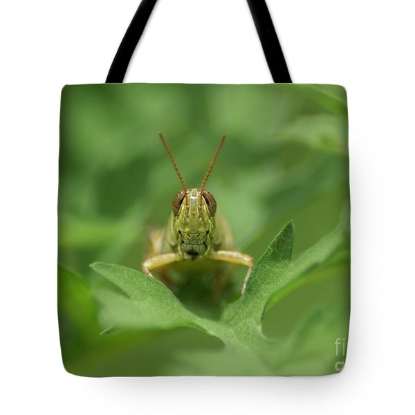 Tote Bag featuring the photograph Grasshopper Portrait by Olga Hamilton