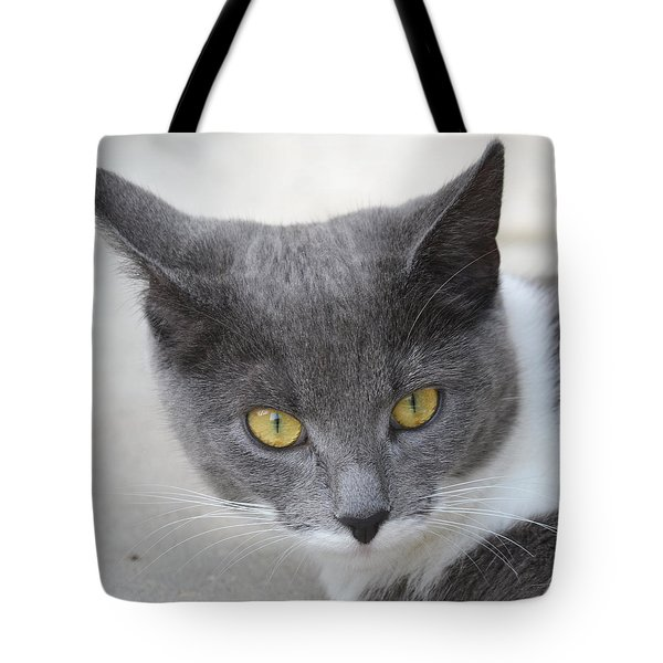Gray Cat - Listening Tote Bag