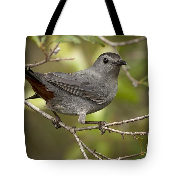 Tote Bag featuring the photograph Gray Catbird by Meg Rousher