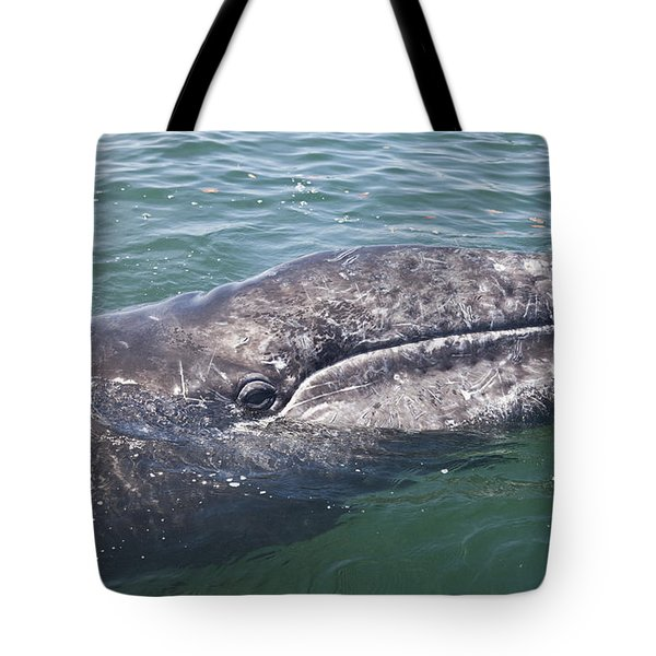 Gray / Grey Whale Eschrichtius Robustus Tote Bag