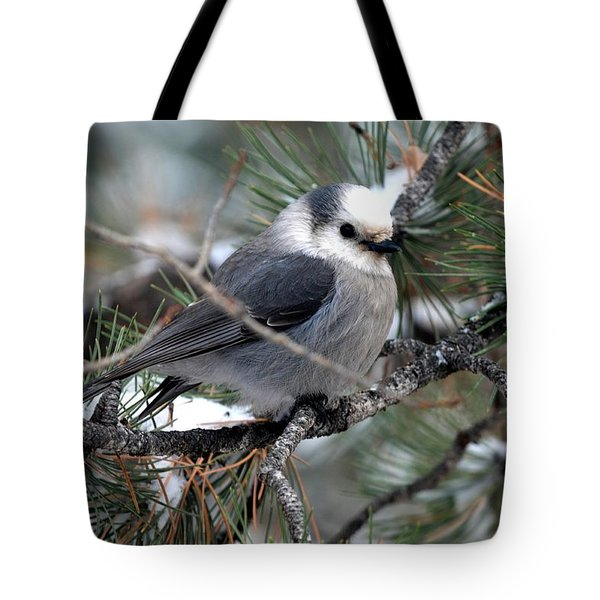 Gray Jay On A Snowy Pine Tote Bag