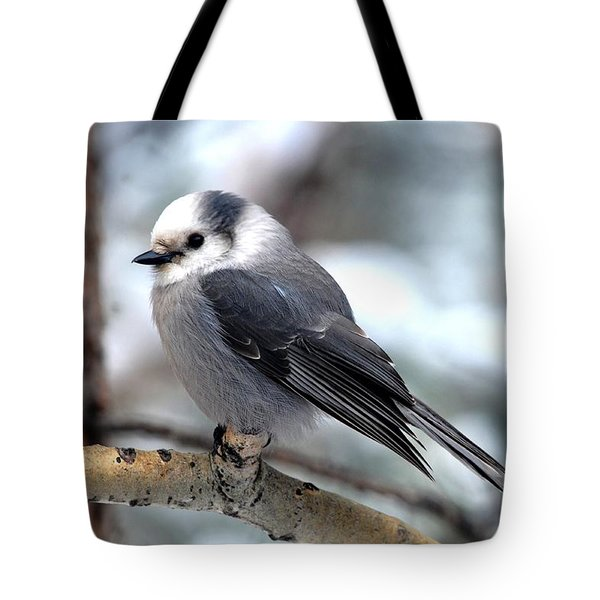 Gray Jay On Aspen Tote Bag