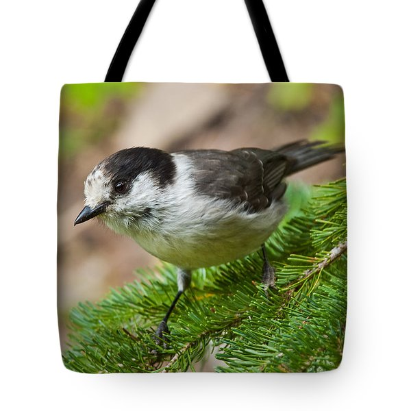 Gray Jay On Fir Tree Tote Bag