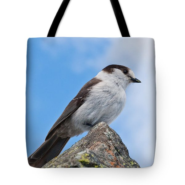 Gray Jay With Blue Sky Background Tote Bag