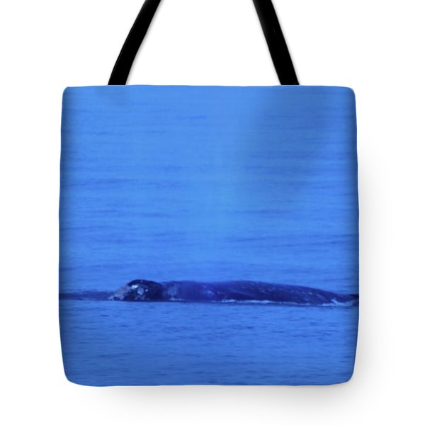 Gray Whalle In Puget Sound  Tote Bag by Jeff Swan