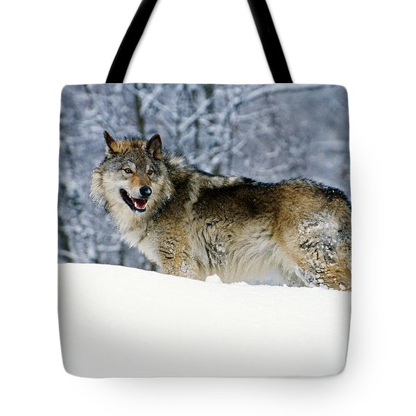 Gray Wolf In Snow, Montana, Usa Tote Bag