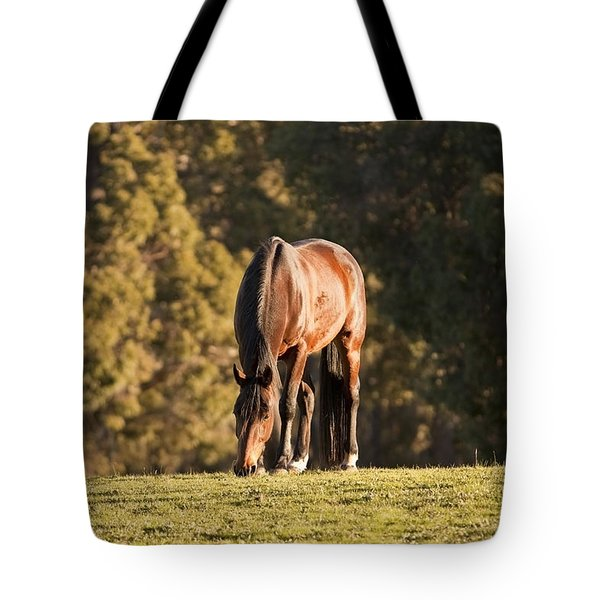 Grazing Horse At Sunset Tote Bag by Michelle Wrighton