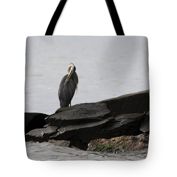 Tote Bag featuring the photograph Great Blue Heron Preening by Rebecca Sherman