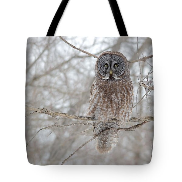 Tote Bag featuring the photograph Great Gray Owl by Nature and Wildlife Photography