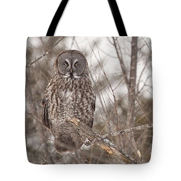 Great Grey Owl Tote Bag by Eunice Gibb