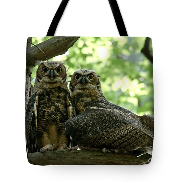 Great Horned Owls Tote Bag by Cheryl Baxter