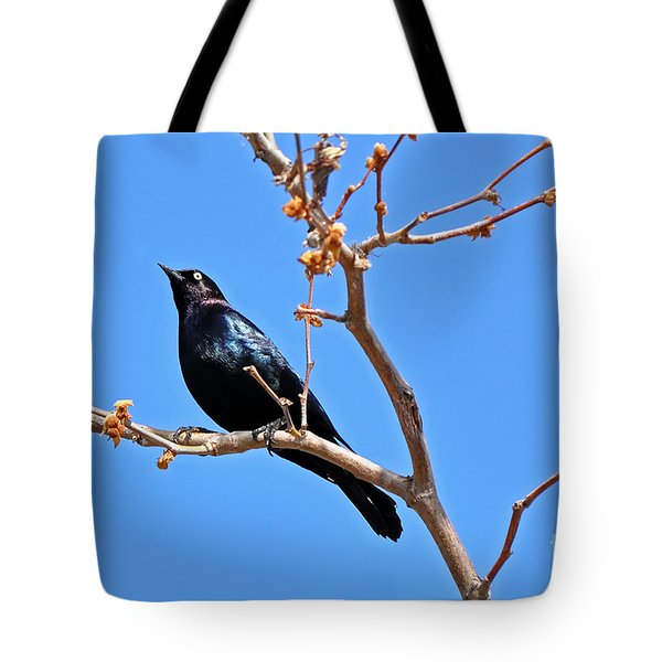 Great-tailed Grackle On A Sunny Spring Day Tote Bag