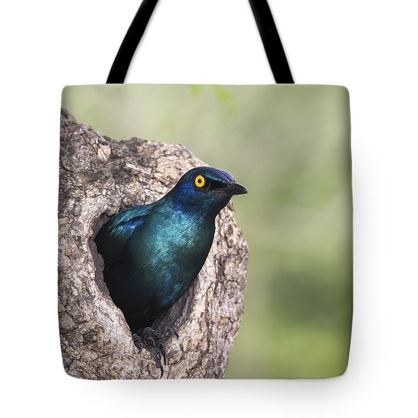 Greater Blue-eared Glossy-starling Tote Bag by Andrew Schoeman