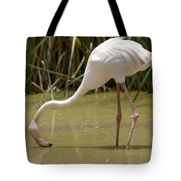 Greater Flamingo Feeding Tote Bag