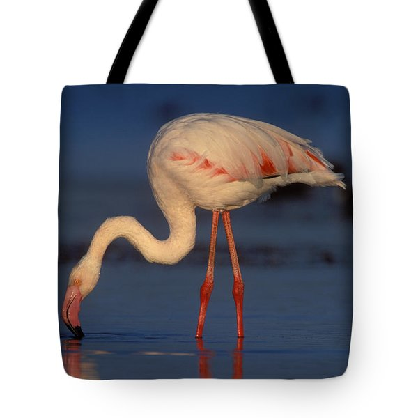 Greater Flamingo Tote Bag