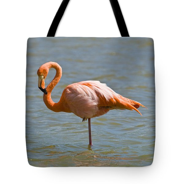 Greater Flamingo Preening In Lagoon Tote Bag