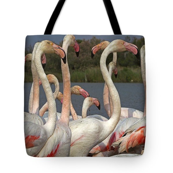 Greater Flamingos, France Tote Bag