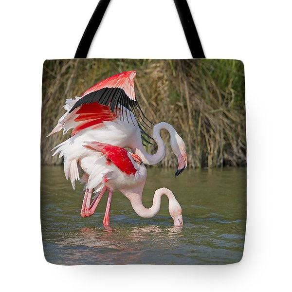 Greater Flamingos Mating Tote Bag