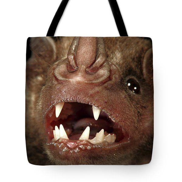 Greater Spear-nosed Bat Tote Bag by Christian Ziegler