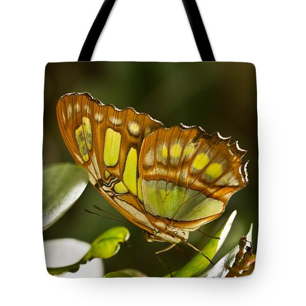 Green And Brown Tropical Butterfly Tote Bag