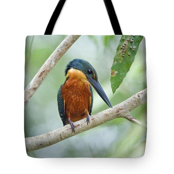 Green-and-rufous Kingfisher Tote Bag