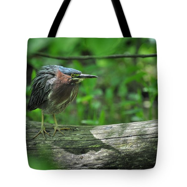Green Backed Heron At The Swamp Tote Bag