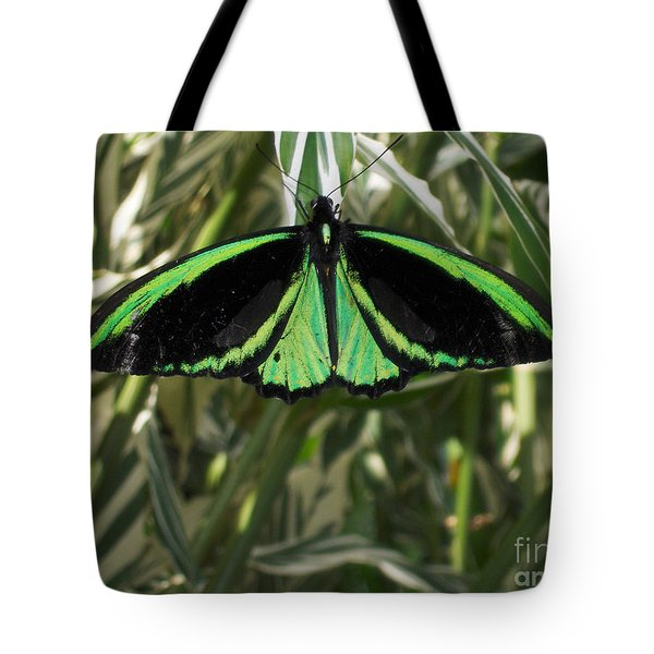 Tote Bag featuring the photograph Green Butterfly by Brenda Brown
