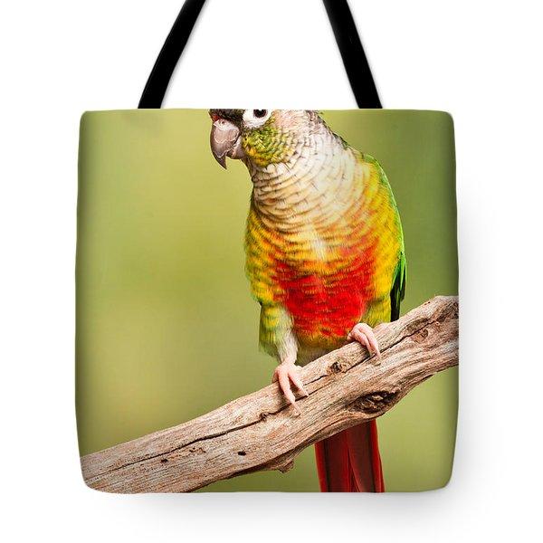 Green-cheeked Conure Pyrrhura Molinae Tote Bag