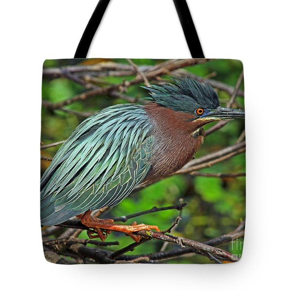Green Heron Breeding Colors Tote Bag by Larry Nieland