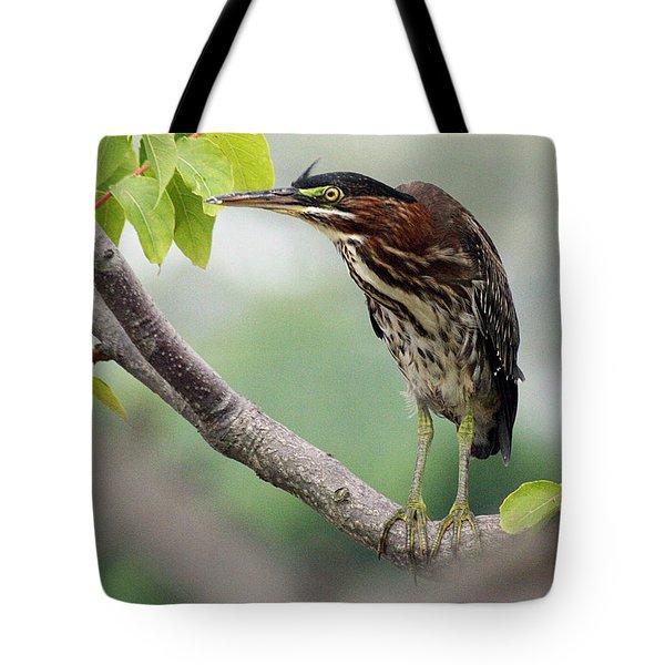 Green Heron In Sumac Tote Bag