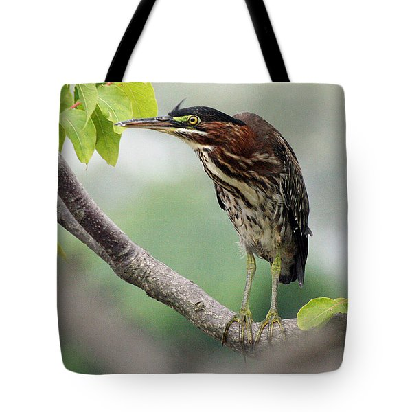 Green Heron In Sumac Tote Bag