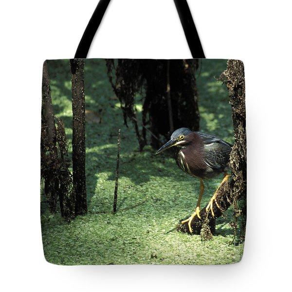 Green Heron Tote Bag by Steven Ralser
