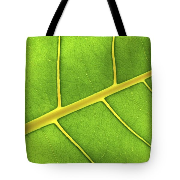 Green Leaf Close Up Tote Bag by Elena Elisseeva