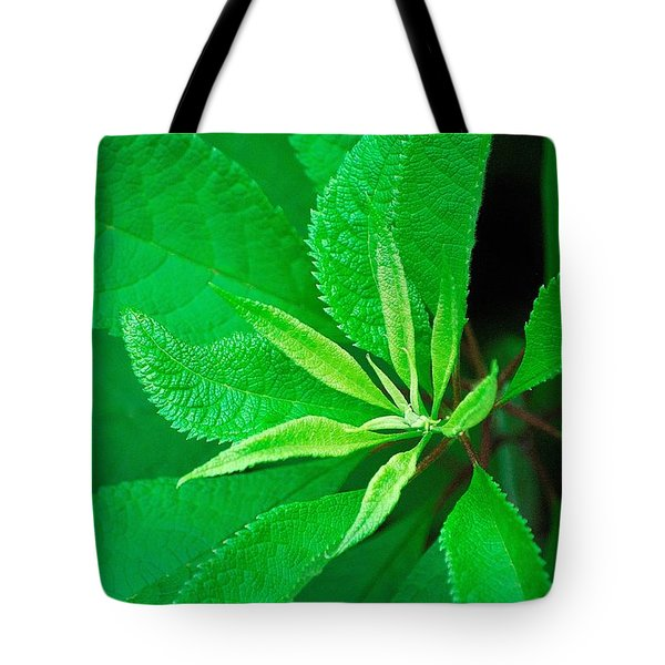 Tote Bag featuring the photograph Green by Ludwig Keck