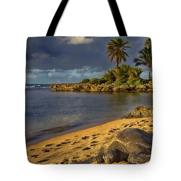Green Sea Turtle At Sunset Tote Bag by Douglas Barnard