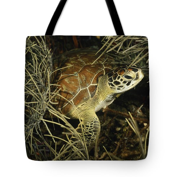 Green Turtle In Soft Corals Tote Bag