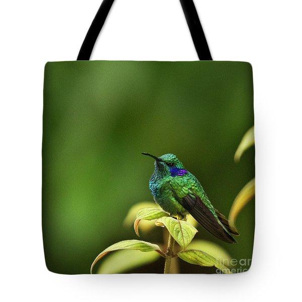 Green Violetear Hummingbird Tote Bag