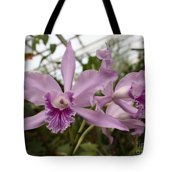 Greenhouse Ruffly Orchids Tote Bag by Carol Groenen