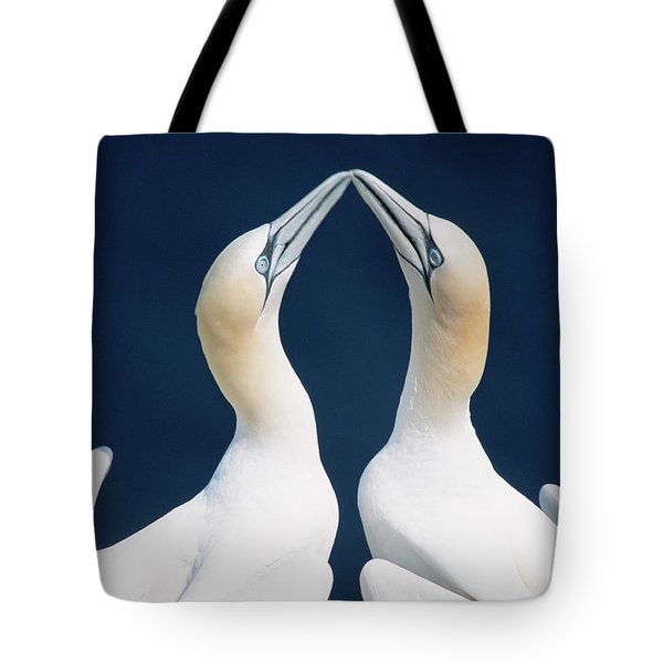Greeting Gannets Canada Tote Bag