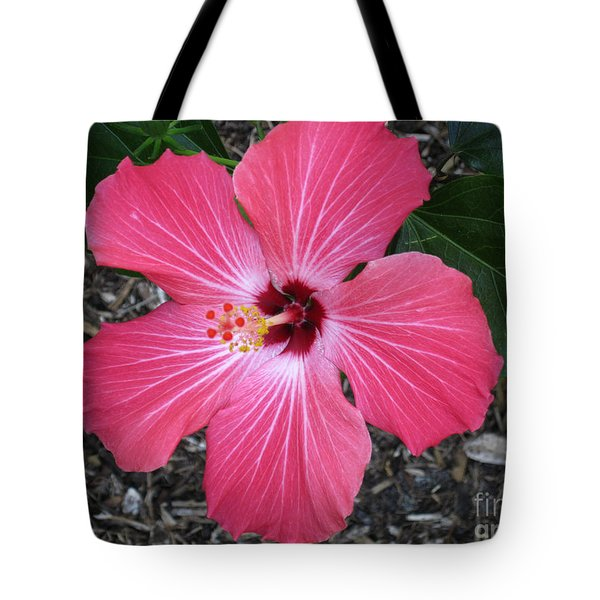 Tote Bag featuring the photograph Greetings From Florida by Oksana Semenchenko