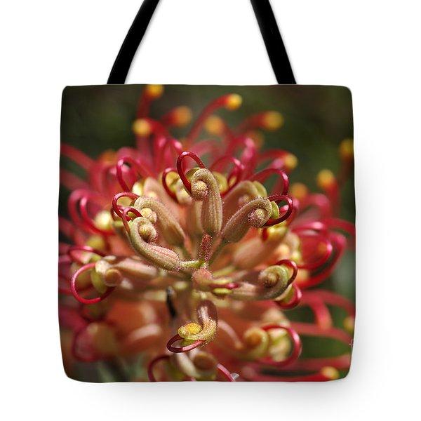 Grevillea Superb Australian Flora Tote Bag by Joy Watson