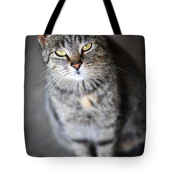 Grey Cat Portrait Tote Bag by Elena Elisseeva