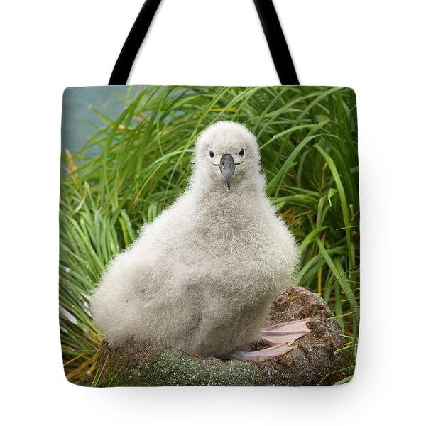 Grey-headed Albatross Chick Tote Bag by Yva Momatiuk John Eastcott